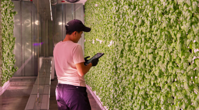 Next-Gen_Farmer_Micah_Helle_Basil_Farm2_Brooklyn.jpg--672x372